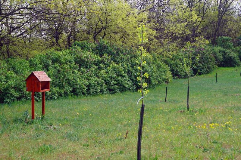 Bakó tanya, hátsó kert