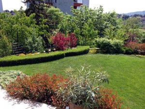 Madárbarát kert