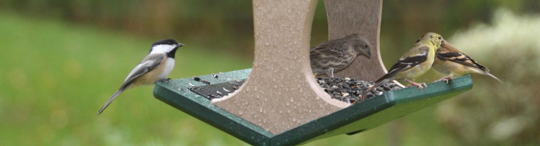 madárbarát fejléc